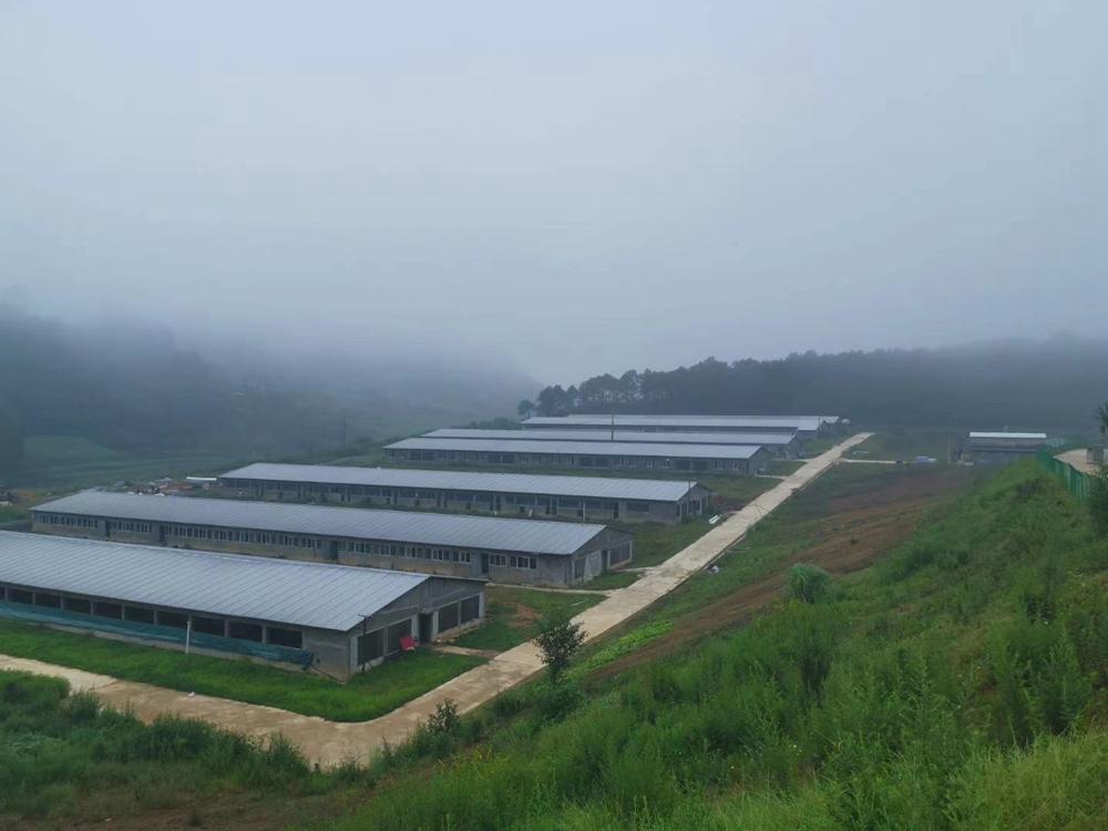 玻镁瓦生产厂家